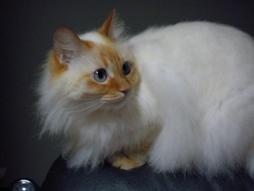 Cat05